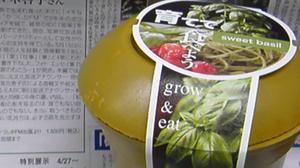 育てて食べようsweet basil - バジルを育てるの巻①